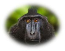 Macaque Wolke
